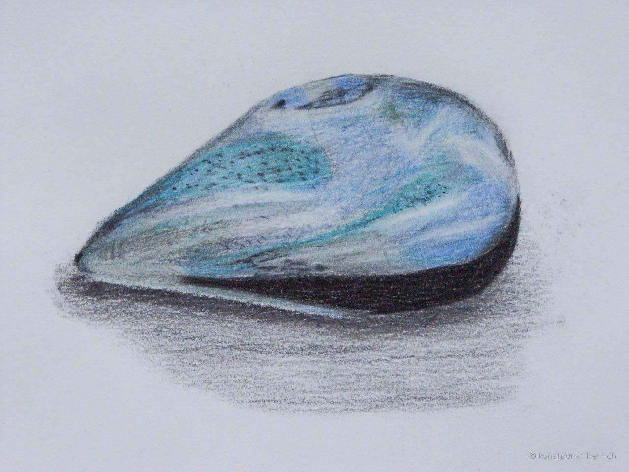 Strandmuschel- Farbstift auf Papier - von Judith Kaffka - kunstpunkt-bern.ch